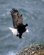 猛禽類:ワシ・タカ・フクロウ