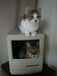 Cats in the Macintosh