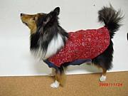 犬の服手作りサークル