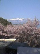 高遠・桜バイト