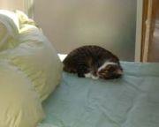 猫をこっそり飼っている(いた)