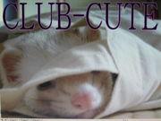 ☆club-cute☆