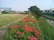 香流川でお散歩