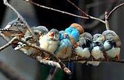 鳥:鳥好き&鳥の健康