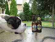 愛犬とビール