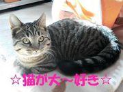 ☆猫が大〜好き☆