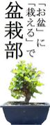 「お盆」に「栽える」で盆栽部