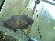 熱帯魚in奈良