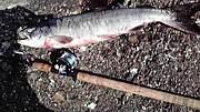 北海道の釣り士