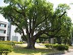 県立明石高等学校