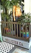 HOLLISTER ホリスター