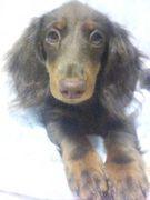 鹿児島☆犬オフ