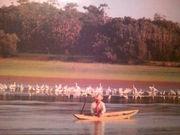 アマゾン川で癒される