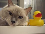 奈良県猫飼い同盟