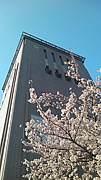 首都大学栃木 右チクビーム