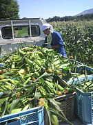 次世代のために農業を変えよう!