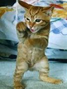 愛してる、猫