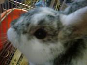 Mosh Rabbits