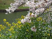 Gaia・ガイア 花と樹の世界