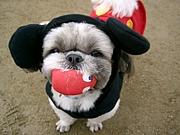 愛犬とホリスティックケア♪