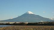 富士川  シーバス