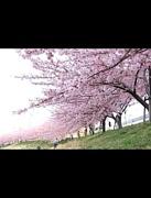 ☆2013年4月20日☆birthday