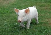 VIVA☆肉(特に豚)牛、鶏もOK☆