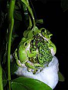 日本の爬虫類・両生類・魚類