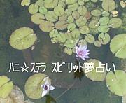 ハニ☆ステラ スピリット夢占い