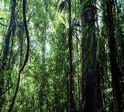 アマゾンの森を買う