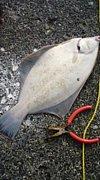 北海道釣り情報交換