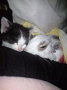 猫&うさぎ