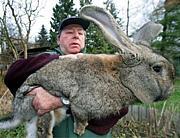 ☆スーパーウサギを愛でる会☆