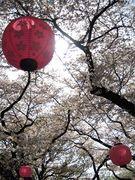 お花見in東京