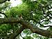 マッサージと植樹の会