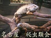 名古屋 爬虫類会