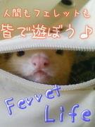 Ferret Life