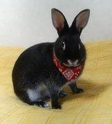 Rabbit★Life