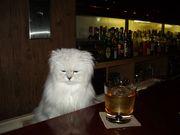 Bar SEEK
