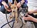 北海道 犬猫の命を守りたい!