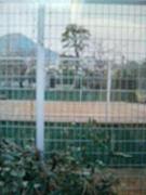 鎮西敬愛ソフトテニス部