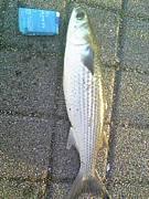 OSAKA.E.C.U Fishing TEAM