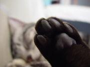 猫の手〜〜(≧∇≦)ノ