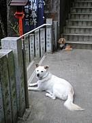 犬鳴情宝館