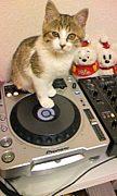 DJ CaruーBee