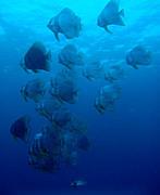 沖ノ島ダイビング
