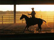 Quarter Horse/クオーターホース