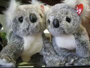 コアラが大好きです