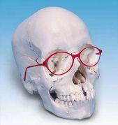 メガネは顔の一部です