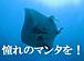 石垣島ダイビング サザン